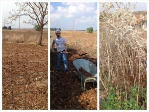 לפני-קוצים ועשבים, בזמן- מעמיסים רסק יער מערימה שהשאיר הדייר הקודם, אחרי- השטח נקי ומחופה, מחכה לשתילות חדשות